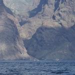 Delfin-03.jpg