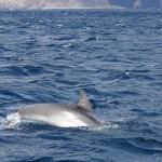 Delfin-10.jpg