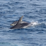 Delfin-12.jpg