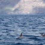 Delfin-13.jpg
