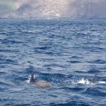 Delfin-14.jpg