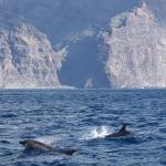 Delfin-16.jpg