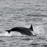 Delfin-19.jpg
