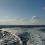 Delfin-20.jpg