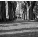 Der Weg zur Ruhe