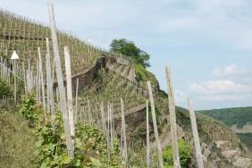 Steillagen-Wanderweg Winningen