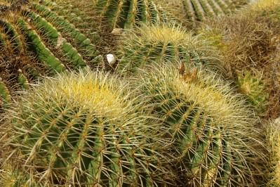 Mallorca 2012 – Botanicactus in Ses Salines
