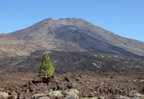 Teneriffa – Durch den Teide Nationalpark